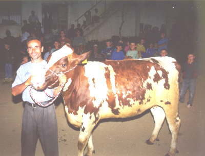Donation of Holstein heifers in Pirane-Prizren in May 2000. 1st import of German breeding cattle after the Kosovo conflict.